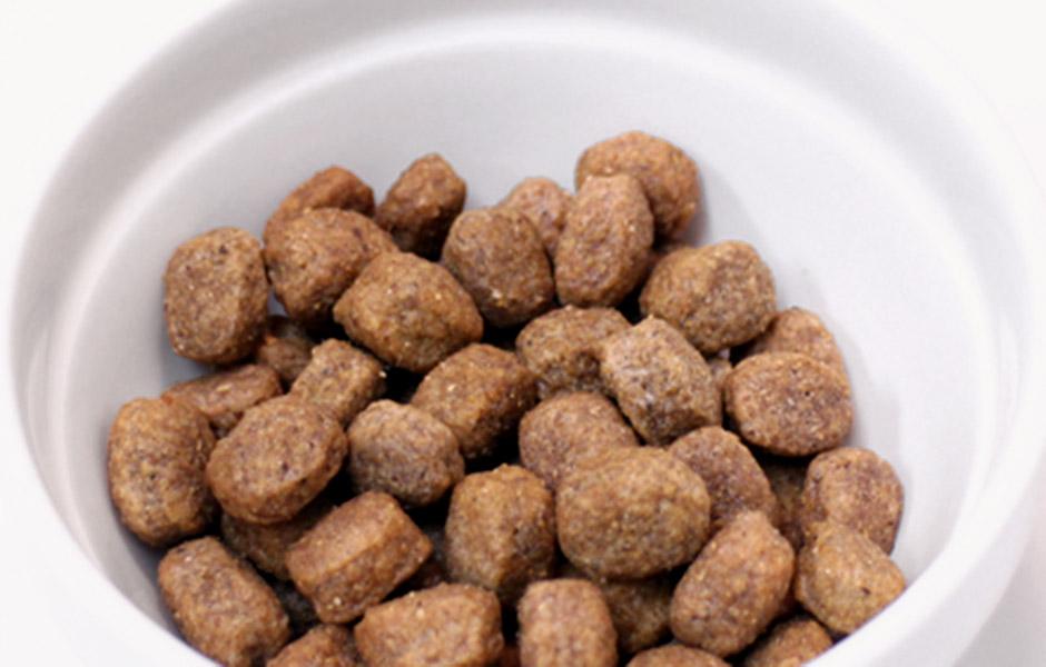獣医師によって開発された特別な食事